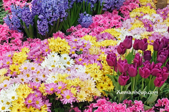 My amazing things blog beautiful flower garden photos for Amazing flower gardens
