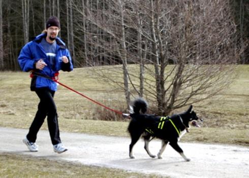 No canicross, a dupla é formada pelo cachorro e seu dono