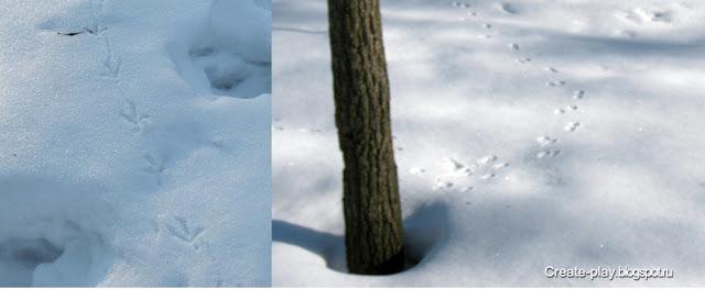 следы птицы и белки на снегу