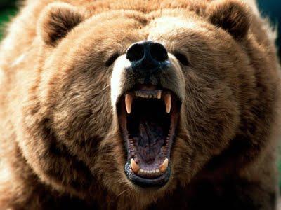 http://2.bp.blogspot.com/-KM76ZfrIayI/UO3HAas2DVI/AAAAAAAAAGQ/FTaZrRlDzmw/s1600/mama-bear.jpg