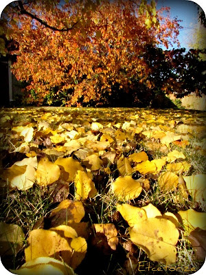 Fall, Autumn, Canadian Fall, Leaves, Changing Leaves, Nature, Fall leaves, Fall trees, Canadian Trees