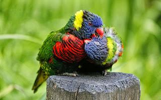 Fondo Pájaros lindos