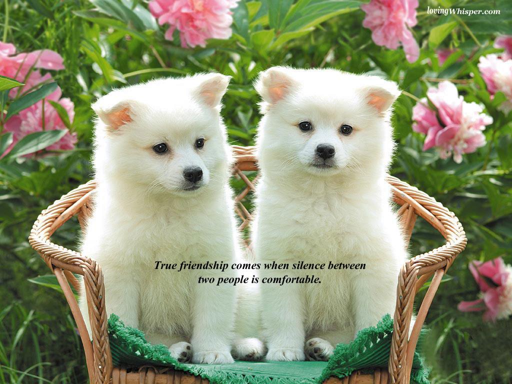 http://2.bp.blogspot.com/-KMYlW2hYDto/UBkmztfvaVI/AAAAAAAAAI4/DDQRYuAZWFA/s1600/friendship+%25284%2529.jpg