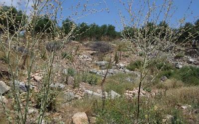 Χανιά: «Ζωντανεύει» το αρχαίο θέατρο Απτέρας