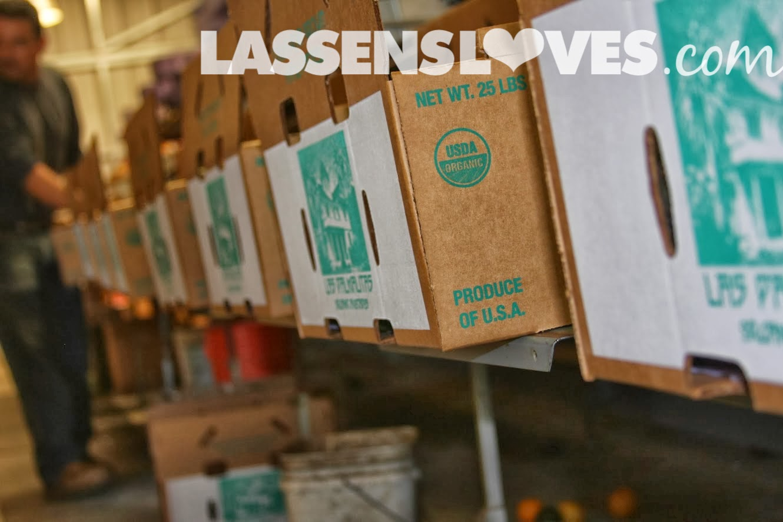 Las+Palmalitas, Organic+Avocados, lasensloves.com, Lassen's, Lassens
