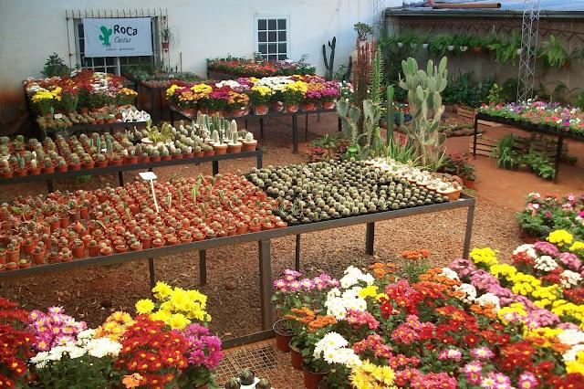 Vivero roca cactus for Viveros ornamentales
