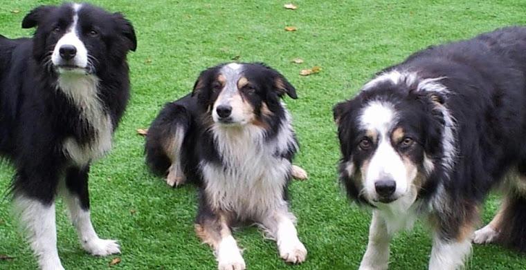 Jackie Gardner's Dogs Blog
