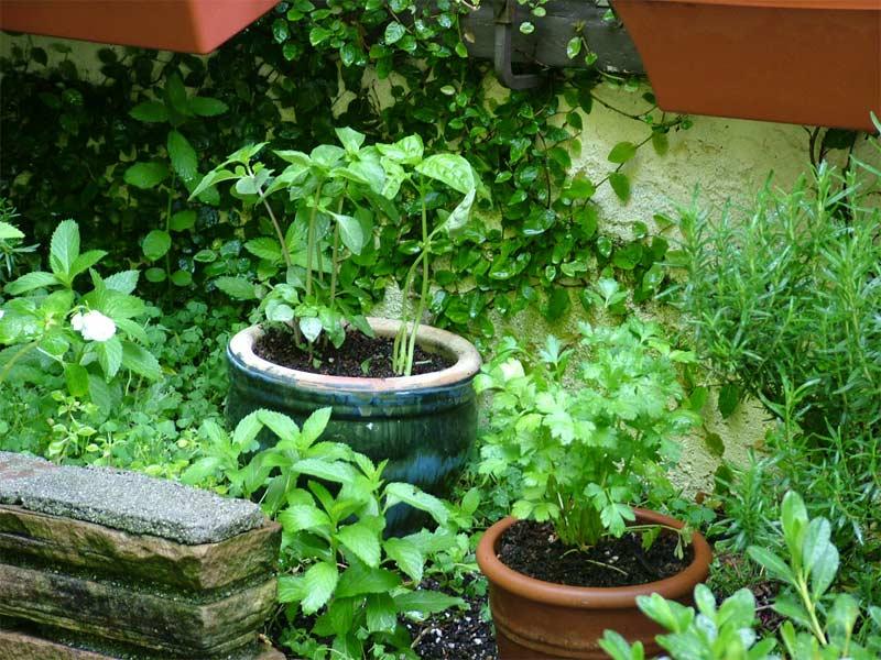 Summer Pleasures Herb Gardens Pallet Furniture Collection