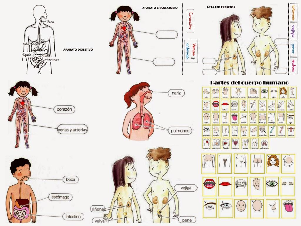 Partes del cuerpo humano | aLeXduv3