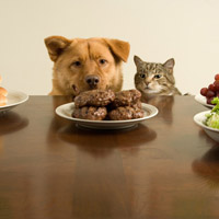 Cat and dog looking at hamburgers