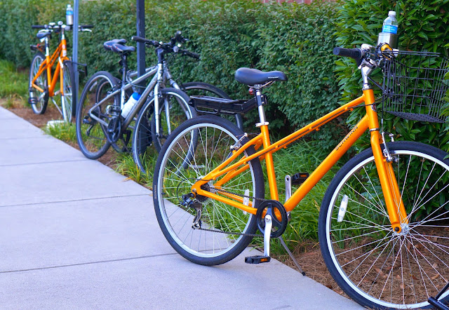 bicycles, knoxville tn, calhoun's turkey creek