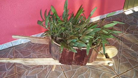 Orquídea na carriolinha madeira...