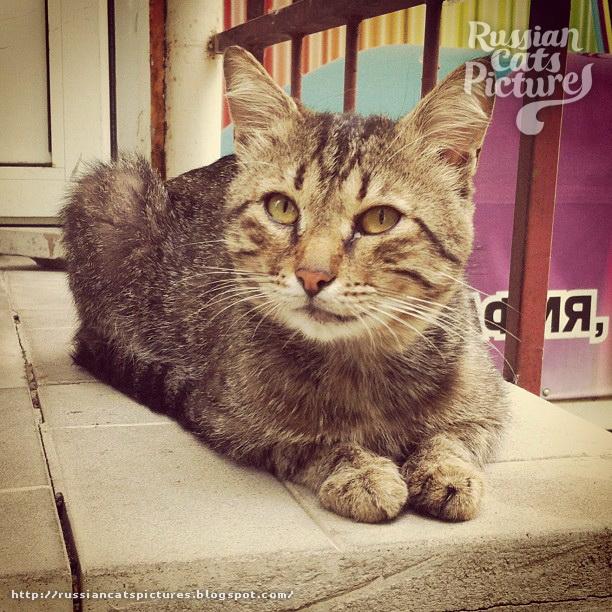 Sad Instacats Cat 05