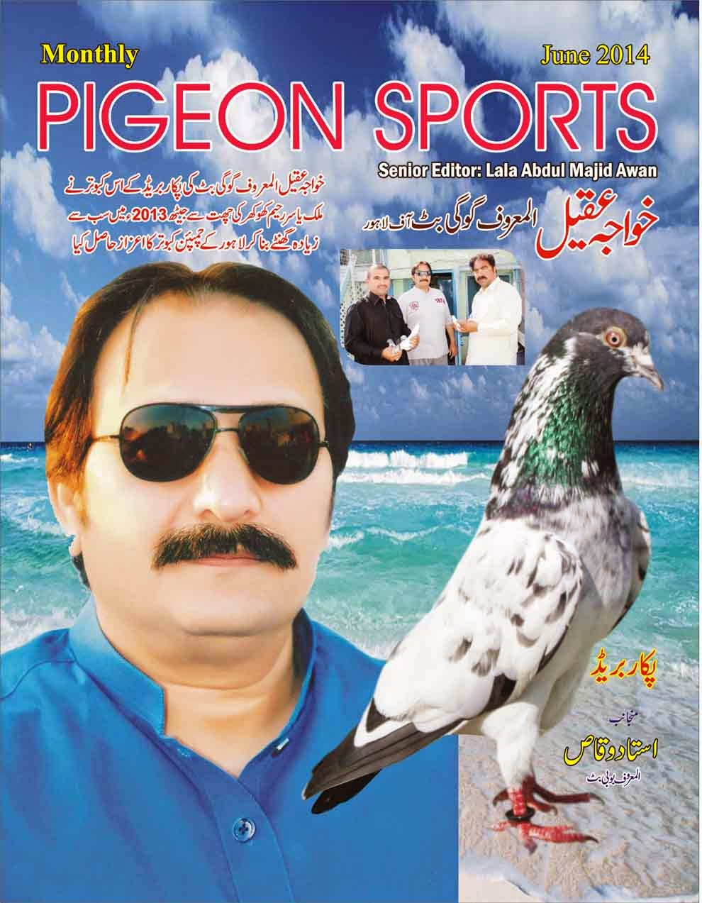 K Magazine Pigeon Pigeon Sports Magazine June