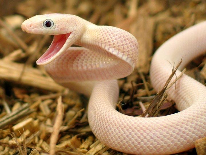 Meryem Uzerli Top 10 Most Beautiful Snakes In The World