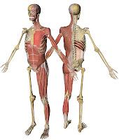 3d Anatomy1
