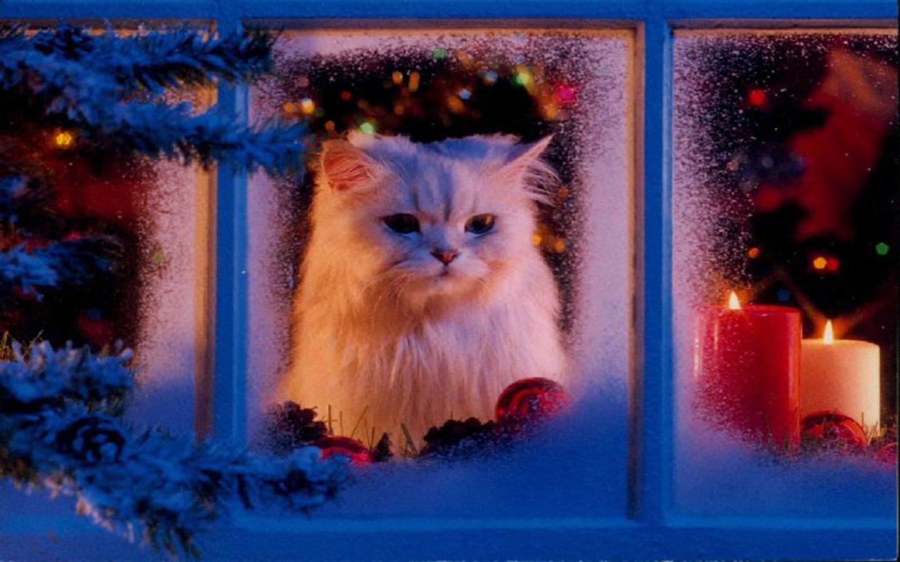 http://2.bp.blogspot.com/-KPMROfgeLpo/UMqm9x4cFKI/AAAAAAAAB0M/FMSndZtosu8/s1600/cats-christmas-pets-HD-Wallpapers+09.jpg
