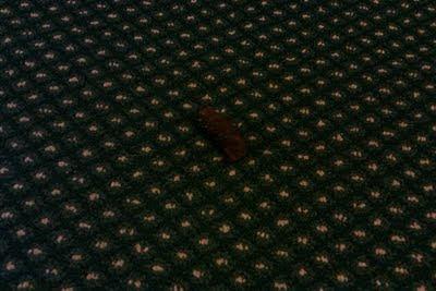 Dog poop in Arlington, VA, apartment building