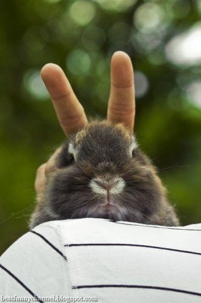 Oh god where are my ears?