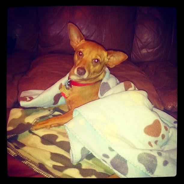 Monday Cozy - Lucky Dog