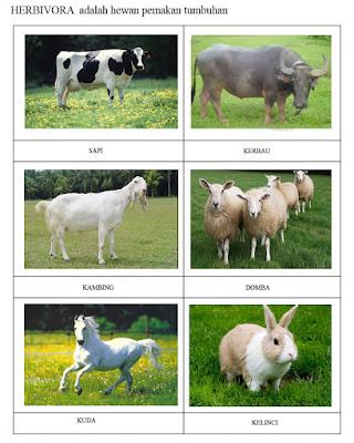 35++ Hewan pemakan daging dan rumput terupdate
