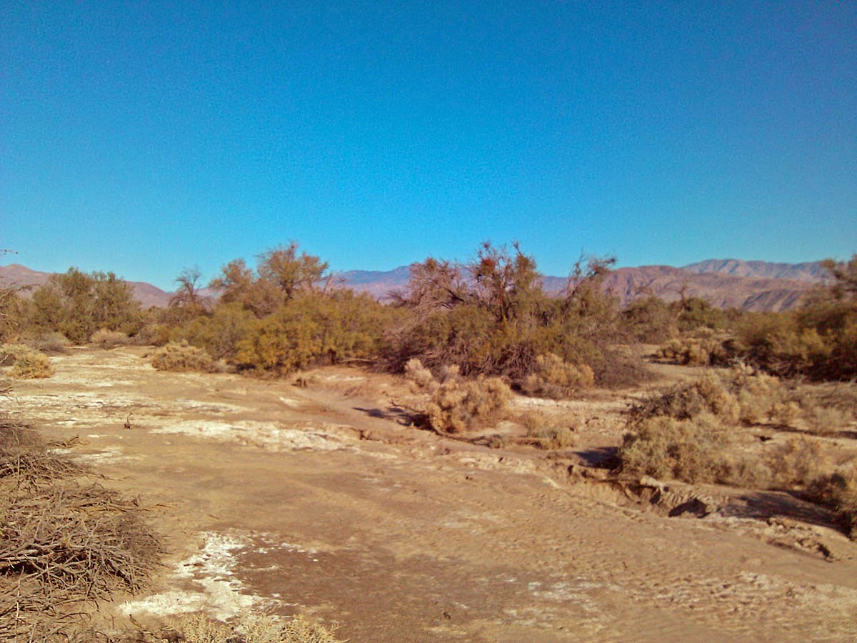 Mesquite Bosque, Borrego Srpings, California