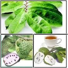 Manfaat daun sirsak untuk kesehatan, manfaat daun sirsak