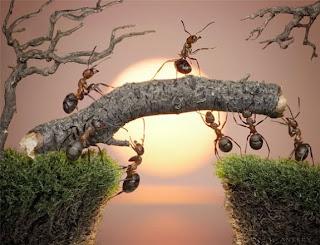 Semut Nabi Sulaiman. semut pertama masuk syurga, Seekor semut yang pernah berbicara dengan Nabi Sulaiman dan kisah ini terkandung dalam Al Quran. Semut trsebut juga merupakan satu diantara 10 haiwan pertama yang akan memasuki syurga. Berikut ialah sedikit penerangan dari kisah semut tersebut,