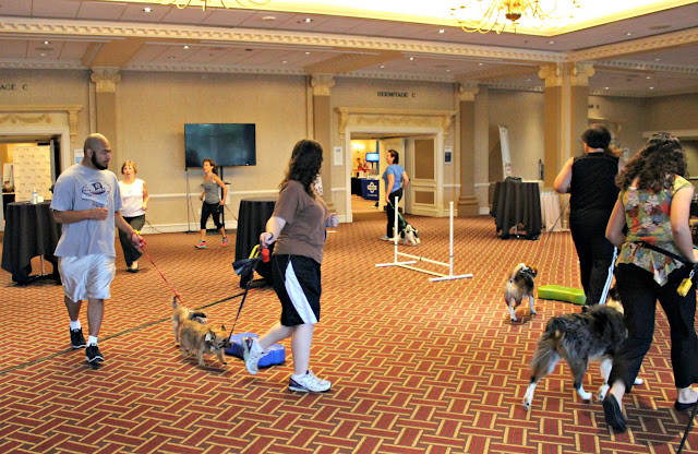 K9 Fit Club BlogPaws group