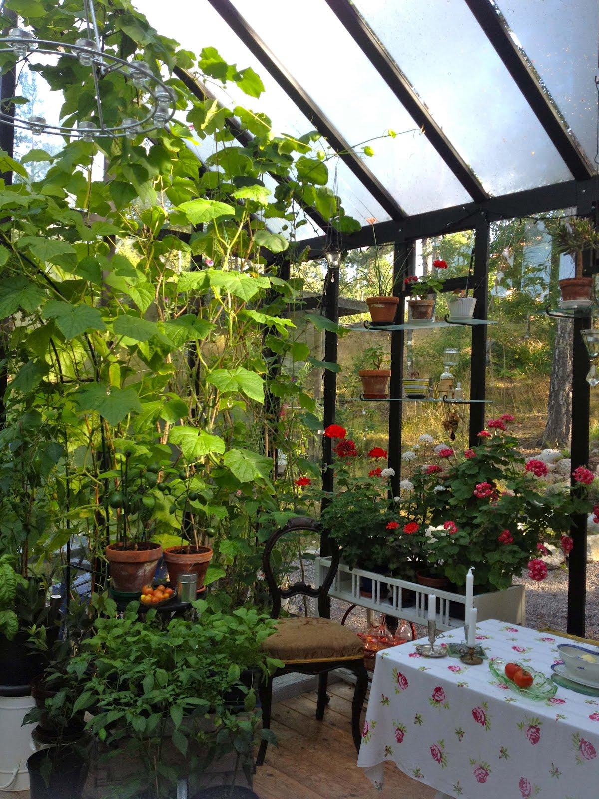 DREAMHOUSE sneakpeak orangeri