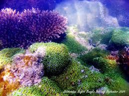terumbu karang dan rumpon berguna untuk