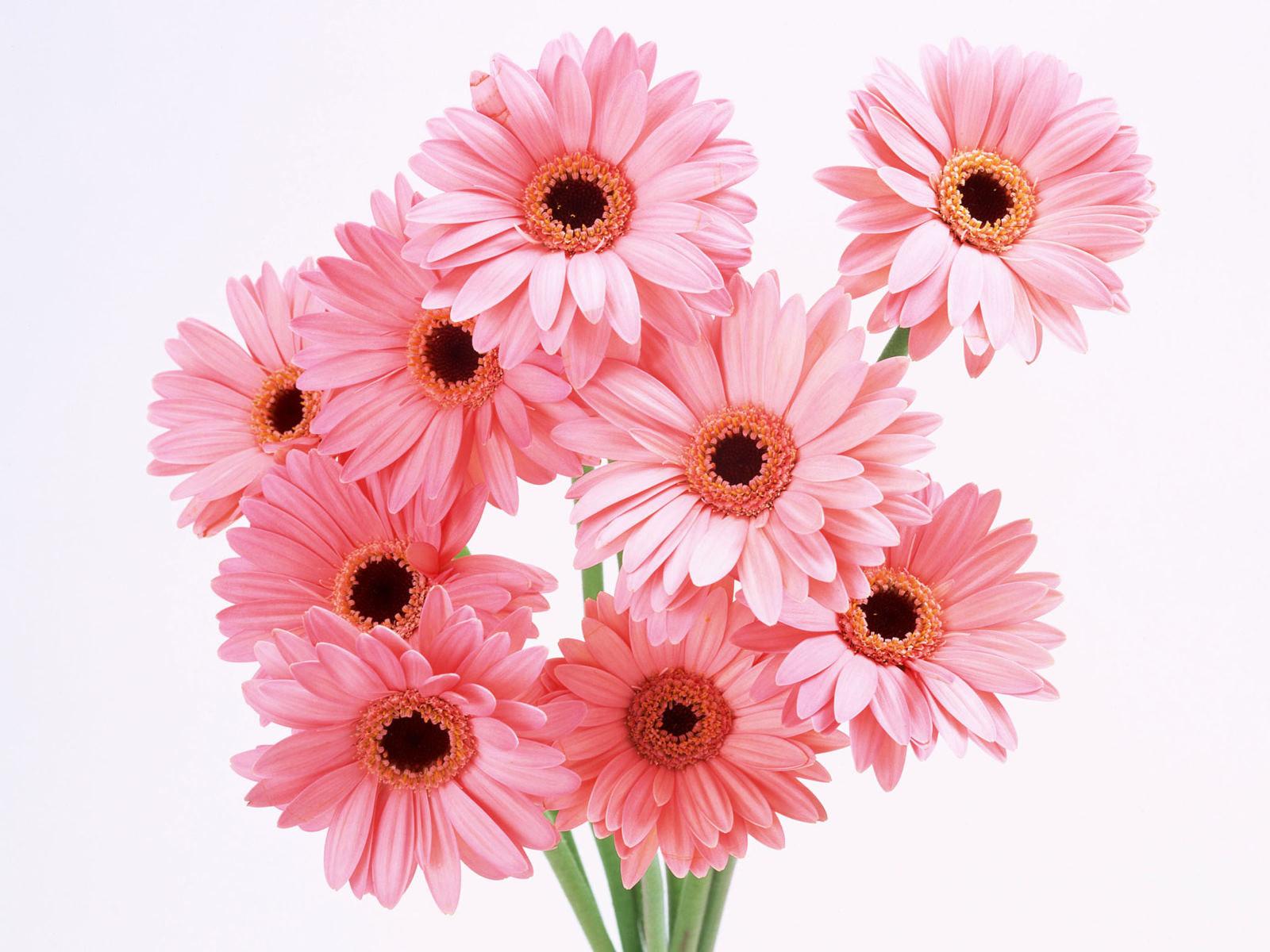 Kristen Sweet: pink flower wallpaper hd