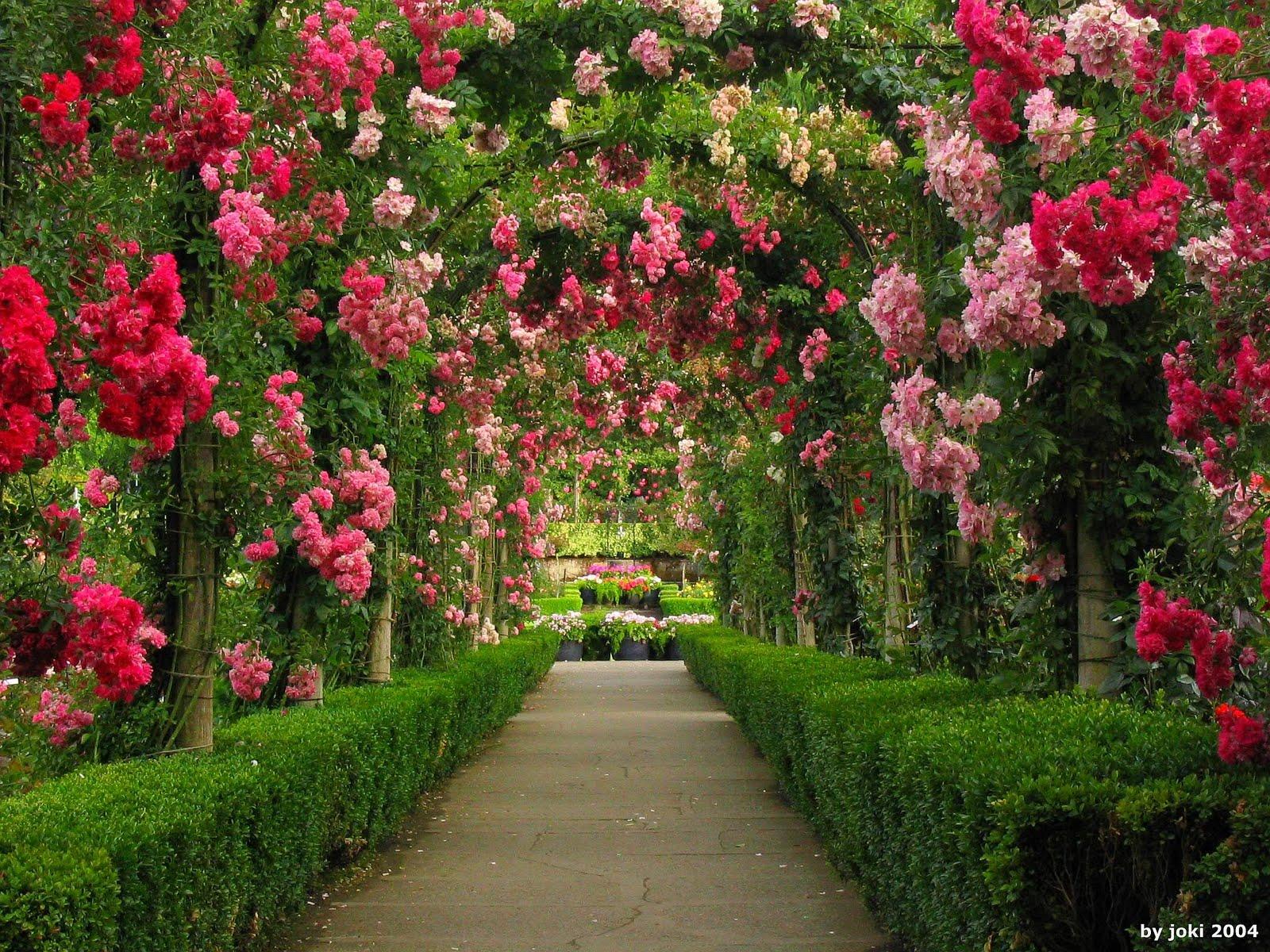 imagens jardim de rosas:Rose Garden