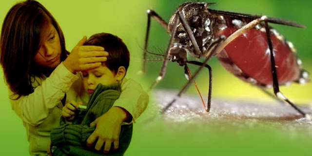 How to Get Rid of Dengue Fever Fast: Home Remedies