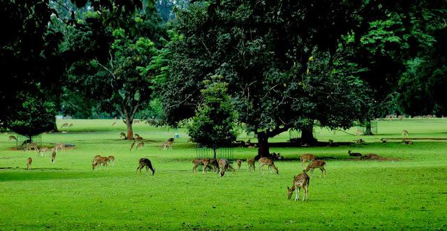 13 Tempat Wisata di Bogor yang Wajib dan Populer Dikunjungi