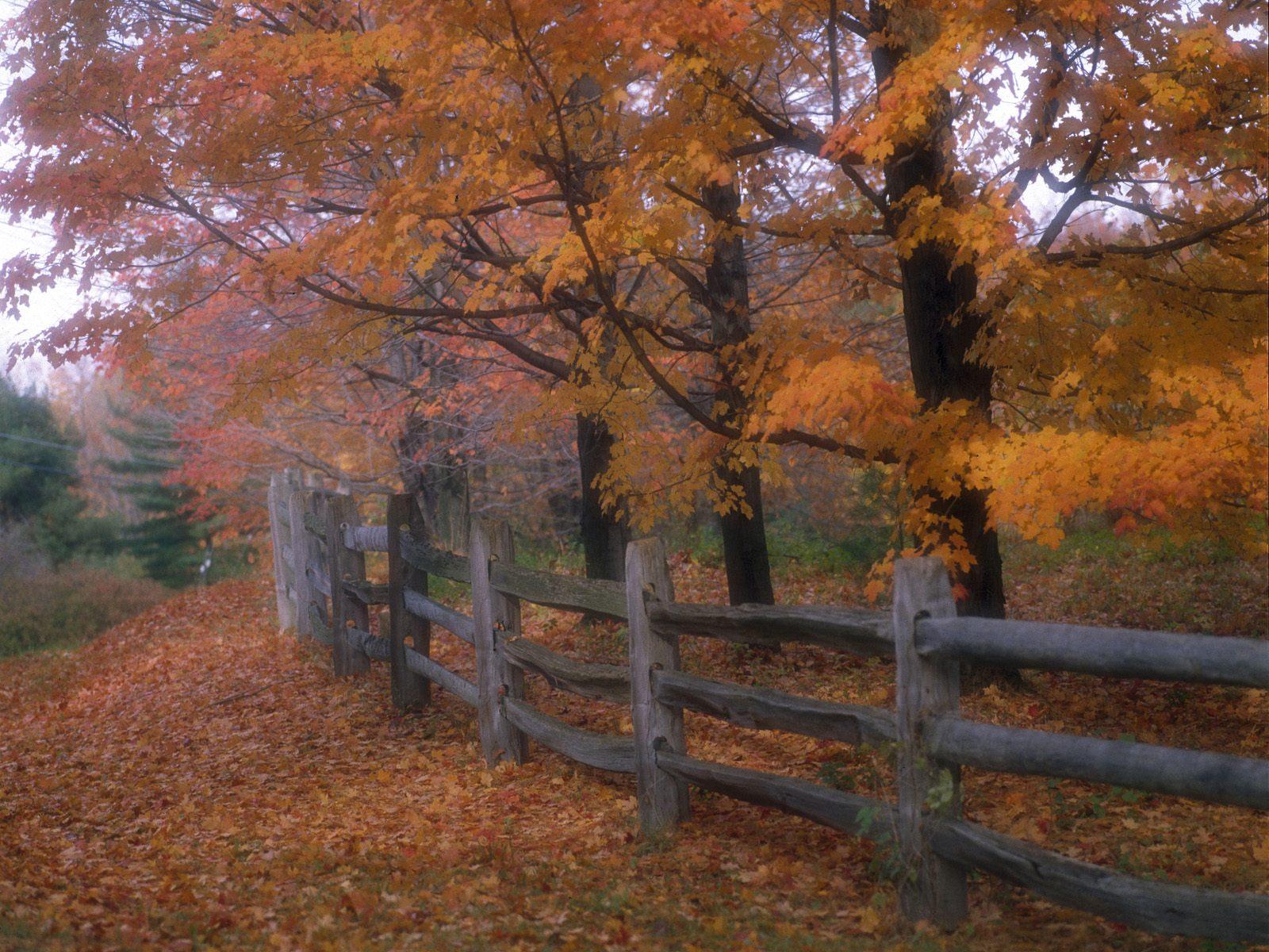 http://2.bp.blogspot.com/-KRwOK3raW_E/Td5p7yIoH2I/AAAAAAAAAMk/CJ0AMGxYiRo/s1600/autumn+6.jpg