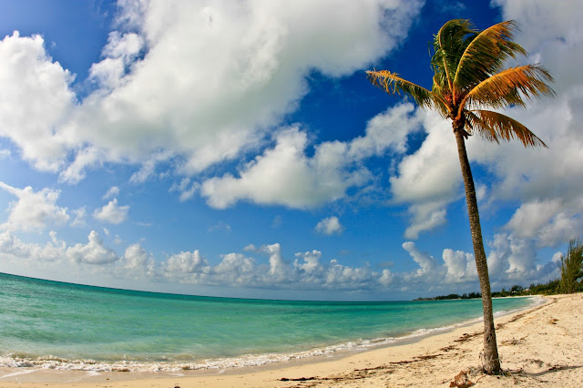 A completely empty beach and a palm tree during a beautiful day on Grand Bahama Island, Bahamas.