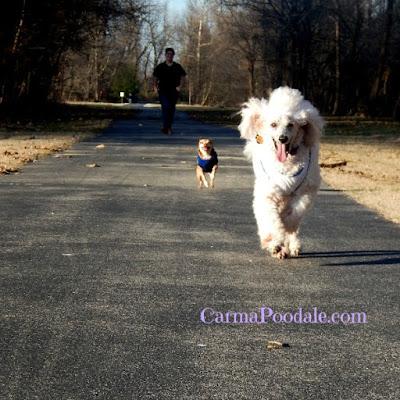 dogs running toward camera