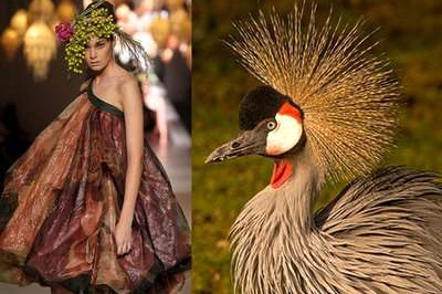 Nature inspired by fashion?