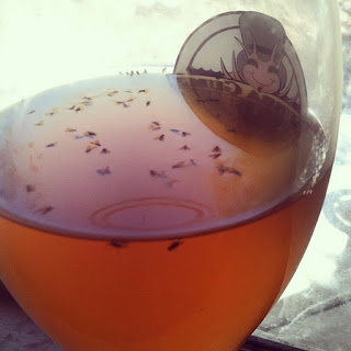 flies in a golden-hued drink