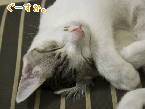 眠っている子猫