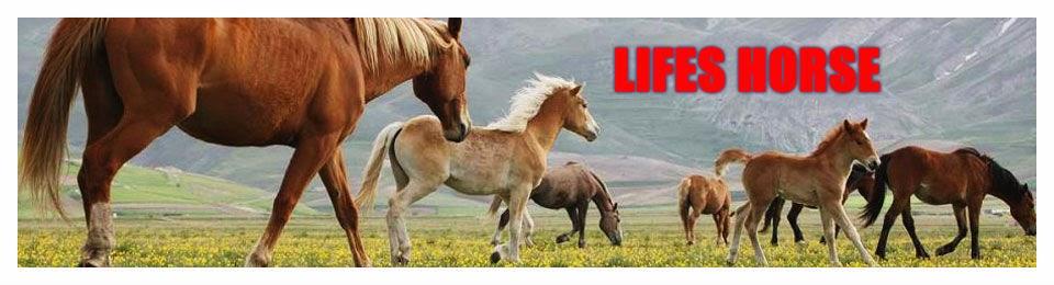 Life Horses