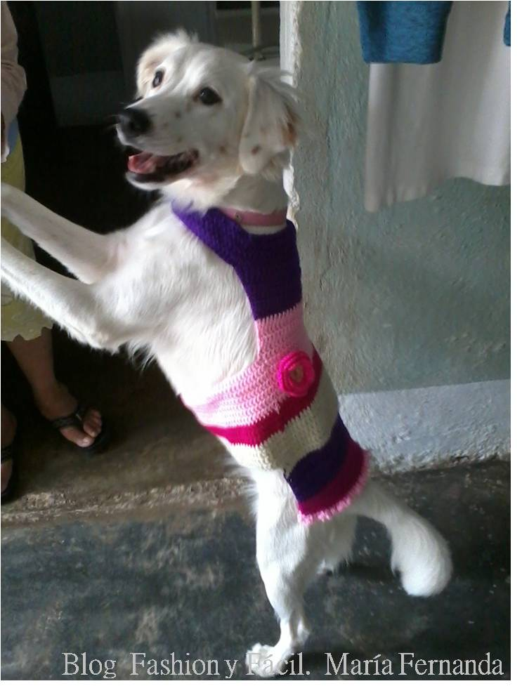 ropa para perros a ganchillo paso a paso? PAP para tejer vestidos ...