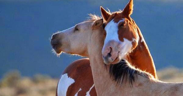 La confidenza lenta cavalli specchio dell 39 anima - Cavalli allo specchio ...