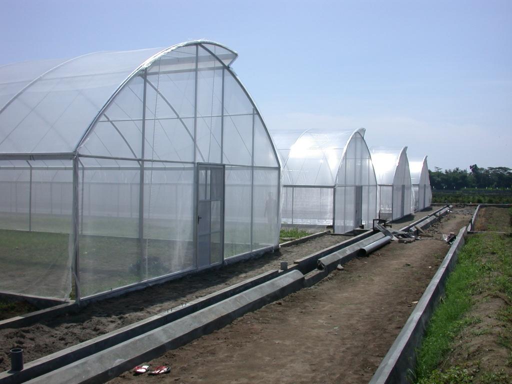 Masyarakat petani dan dinas pada umumnya memilih membangun greenhouse sederhana sesuai tujuan dan keperluan masing-masing. & Perusahaan Greenhouse Rumah kaca