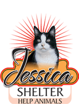 Donate to Cat shelter JESSICA in Serbia