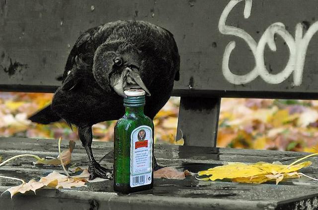 15 fotos de animais em situações engraçadas