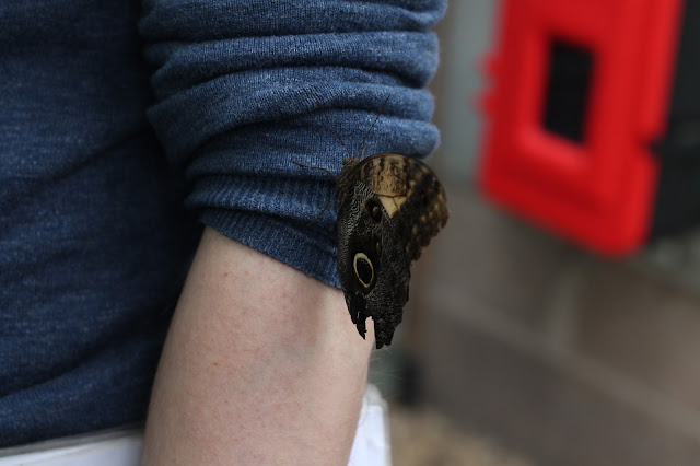 big butterfly on man's arm at Wye Valley Butterfly Zoo