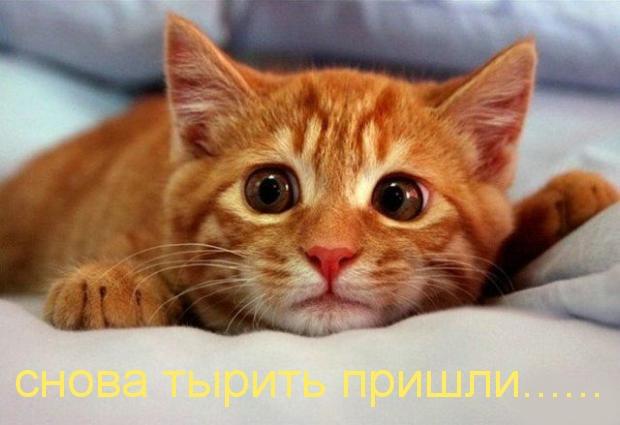 Кот с выпученными глазами: спокойно Редискин, твои идеи всё равно неповторимы