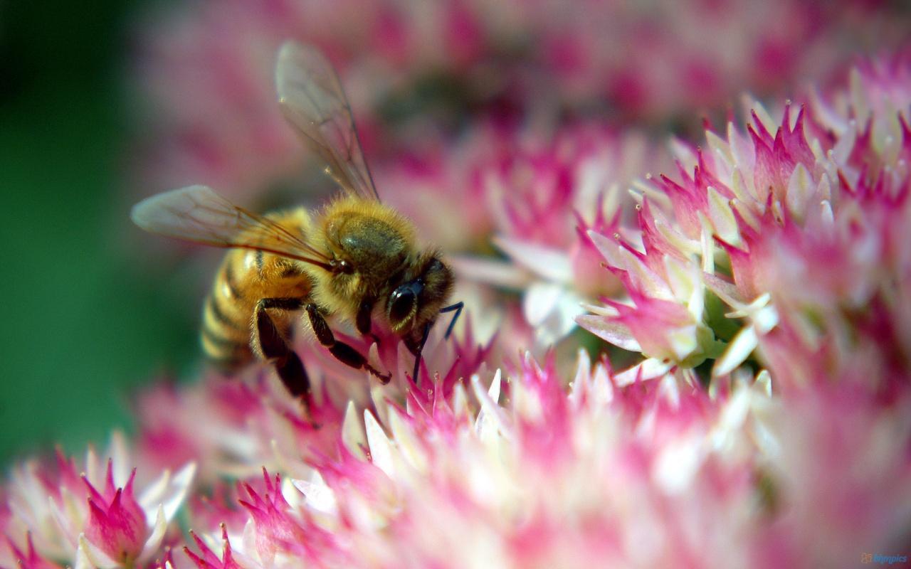 Diligent Bee in Flower